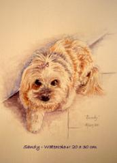 watercolour pet portrait of Sandy