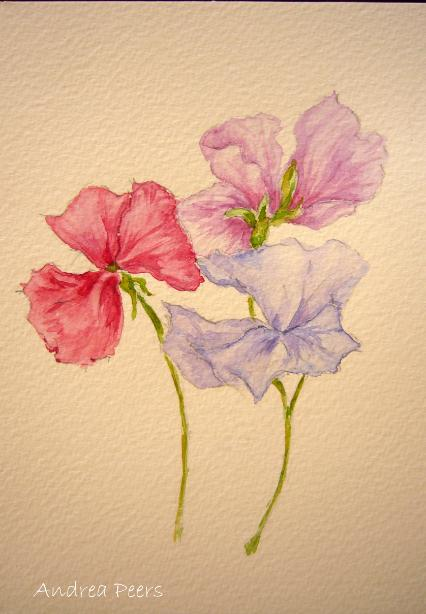 watercolour flower painting sweet pea